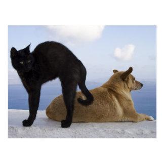 Cat and dog postcard