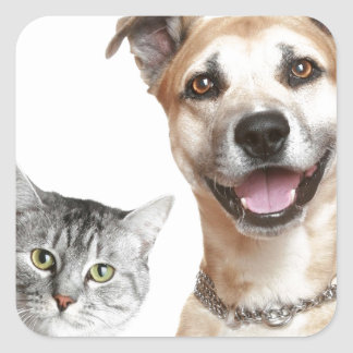Cat and Dog Says Hey Square Sticker