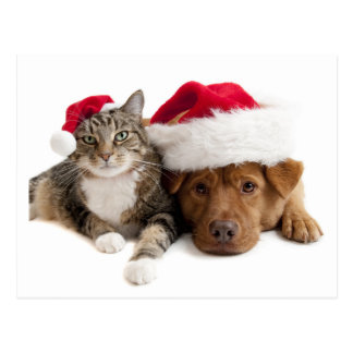 Cat and Dog Wish A Merry Christmas Postcard