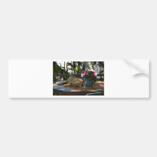 CAT AND FLOWERS BUMPER STICKER