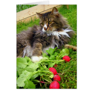 Cat and Garden Radishes / Blank Greeting Card