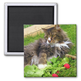 Cat and Garden Radishes / Magnet