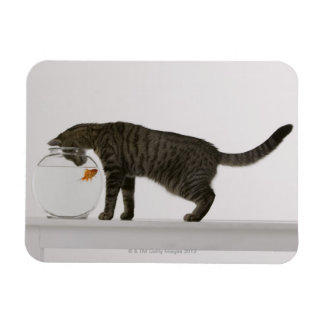Cat and goldfish magnet