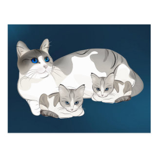 cat and kittens postcard