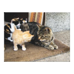Cat and Kittens Staring at each other Canvas Prints