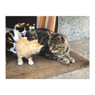 Cat and Kittens Staring at each other Canvas Print