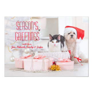 Cat And Maltese Sitting Under The Tree Card