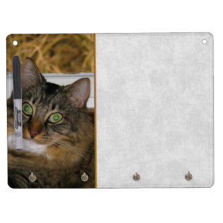 Cat and Matching Background Dry-Erase Boards