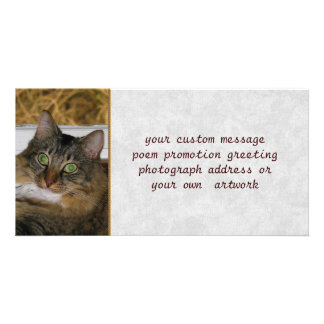 Cat and Matching Background Personalized Photo Card