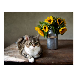 Cat and Sunflowers Postcard