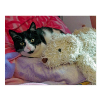 cat and teddy postcard