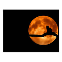 Cat and the moon postcard