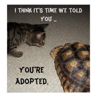 """Cat and Tortoise - """"You're Adopted"""" Poster"""