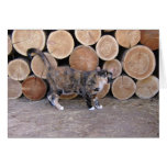 Cat and woodpile card