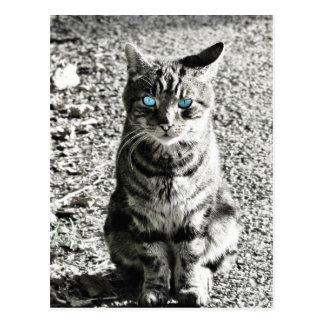 Cat Animal Pet Postcard