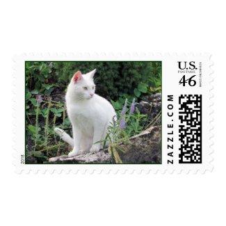 Cat Animal Photo USA Postal Stamp Postage stamp