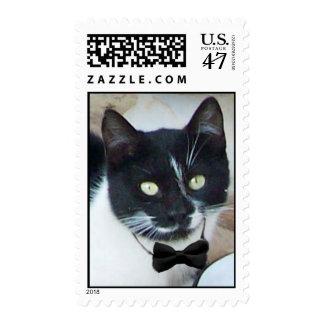 CAT APACIBLE EN el detalle del RESTAURANTE, feliz Timbre Postal