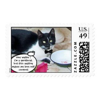 CAT APACIBLE EN el feliz cumpleaños del Sello Postal