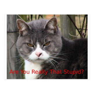 Cat: Are you really that stupid? Post Card