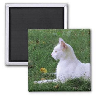 Cat Art Photo Magnet, White Kitten Magnet