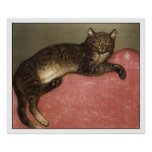 Cat Art Poster/Print: Stretched Cat by Steinlen