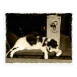 Cat at a restaurant near menu en París, France Tarjetas Postales