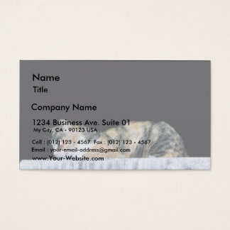 Cat At Night Business Card