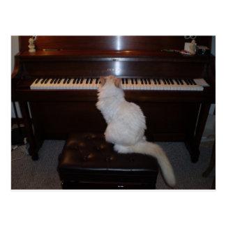 Cat at Piano Postcards