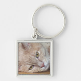 Cat at rest keychain