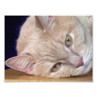 cat at rest photo print