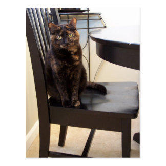 cat at table chair postcard