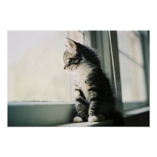 Cat at Window Print