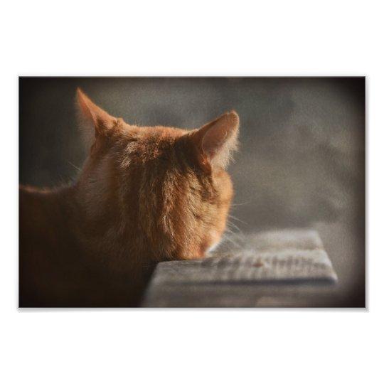 Cat Attitude Photo Print
