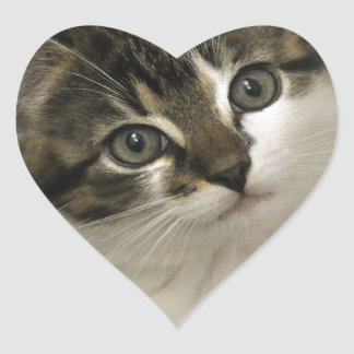 cat-baby heart sticker
