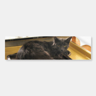 Cat Baked Bumper Sticker