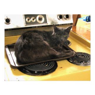 Cat Baked Flyer