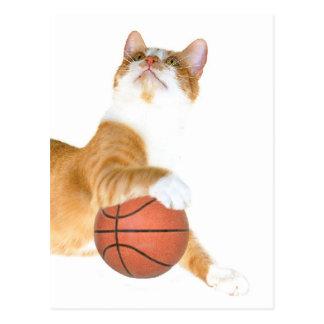 Cat basketball postcard