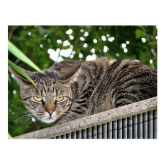 Cat becomes bad postcard