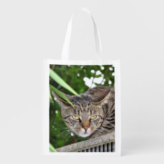 Cat becomes bad reusable grocery bag