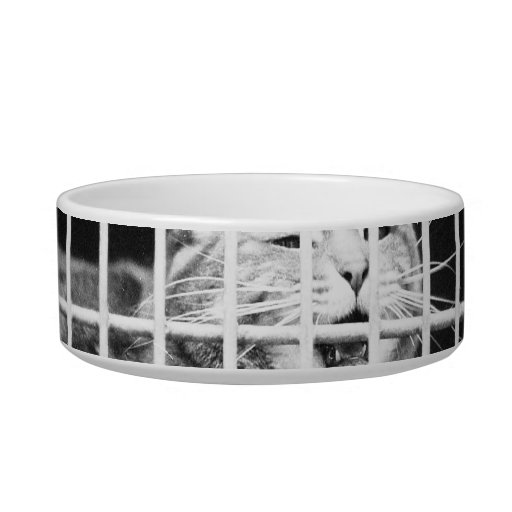 Cat behind bars with mouth open mean kitty bowl