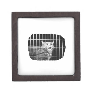 Cat behind bars with mouth open mean kitty gift box