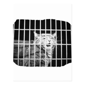 Cat behind bars with mouth open mean kitty postcard
