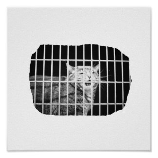 Cat behind bars with mouth open mean kitty poster