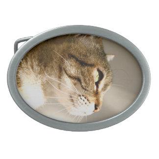 cat oval belt buckle