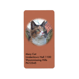 Cat Big Eyes Label