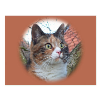 Cat Big Eyes Postcard