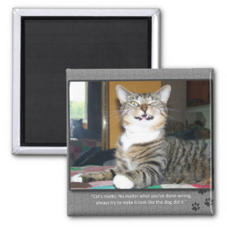 Cat Blames Dog Magnets