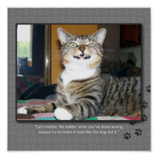 Cat Blames Dog Poster