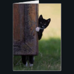"""Cat blank card - sympathy, thank you, birthday!<br><div class=""""desc"""">Use this fun picture to greet anybody with anything - their birthday,  sympathy,  congratulations,  or a thank you! Great to have on hand. Blank inside so you can customize it on Zazzle online or hand-write a message.</div>"""