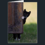 "Cat blank card - sympathy, thank you, birthday!<br><div class=""desc"">Use this fun picture to greet anybody with anything - their birthday,  sympathy,  congratulations,  or a thank you! Great to have on hand. Blank inside so you can customize it on Zazzle online or hand-write a message.</div>"